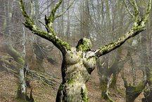 Trær / Trees