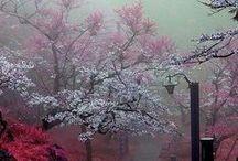Japan / #Japan #Tokyo #Akihabara