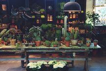 Bloemen Shop