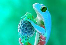 Reptiles & anphibia / y anfibios
