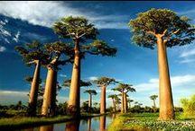 Trees / Árboles
