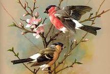 ΠΟΥΛΙΑ...oι άλλοι κάτοικοι της γης...... / πουλιά και πουλερικά..η πανίδα της γης..