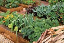 tuinieren in bakken