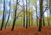 Natuurmonumenten / Natuurparken door heel Nederland