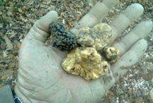 Truffles / Italian truffles
