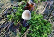 Mushrooms | Paddestoelen / Nederland staat het hele jaar vol met de prachtigste exemplaren, groot of klein, zo'n 5000 soorten! Hier mijn assortiment in macro gefotografeerd.