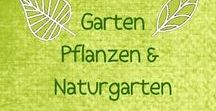 Garten [Naturgarten]