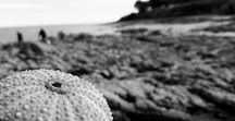 Bretagne / La Bretagne, paysage, mer , photos, noir et blanc