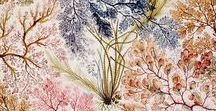 Pattern / Pattern and inspiration