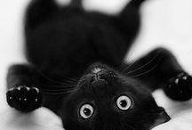 Black kitty!!! <3