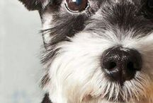 """Dog Breeds / Discover dogs """"names"""" and learn more about them"""