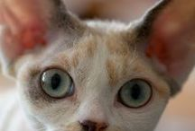 Cat Breeds / Learn cats names and discover more about them