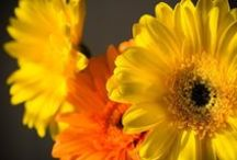 Растения / Различные растения и цветы, в разных уголках мира.