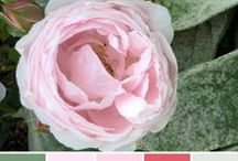 Colour Palettes by Astrid / Design inspiration, colour, mood, photography, Astrid Blake-trend and colour forecasting