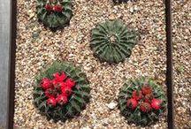 Austin Plant Palette