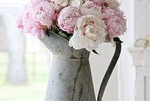 Beautiful flowers / Mooie bloemen