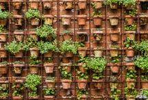 GARDEN - walls / by Kerstin Kampa
