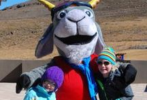 The Pudi Club - Afriski / Your kids will be introduced to the most amazing (and only) skiing goat in the world, Pudi. A full range of children's activities with Pudi, to make sure they enjoy themselves at least as much as you do.
