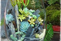 Flores e jardim / Ideias de paisagismo e arranjos florais