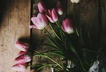 Tulips)