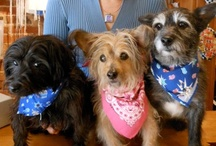 Man's Best Friend / At 2910, we love dogs so much, we have two canine assistants, Winston and Ella!