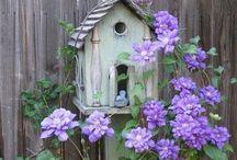 Gardening / by Anne Elliott