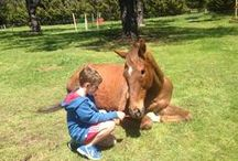 Horses / We rescue our Horses from sales yards. Our program is called Paddock Pals, you can adopt horses from our charity.
