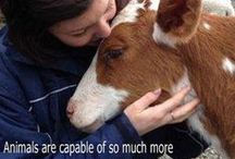 Other Animals  / Animals give unconditional love