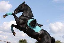 Horsey Things