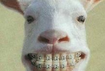 Things that make us smile / by German Orthodontics