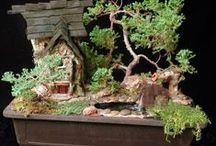 Fairy gardens - Tündérkertek