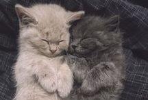 cuddly friends