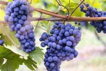 Wein- und Obstgarten / In unseren Gärten und am Südhang wächst heran, was wir nach dem Ernten zu Wein, Säften oder Edelbränden weiterverarbeiten. Auch das Tafelobst und kleine Naschereien kommen aus der Natur rund um unser Wein- und Obstgut.