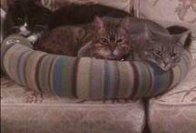 Cats amazing creatures / Cats