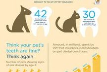Dental Care for Pets / Dental tips for your pets, dental care for pets, dental care for cats, dental care for dogs, how to take care of pet's teeths