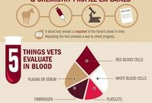 Blood Work for Pets / Tips on getting blood work on your pets, tips for healthy pets, blood work on your dog, blood work on your cat, blood work at the vet