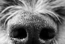 Stunning Pet Photography / Beautiful photos of animals, beautiful photography of pets, awesome photos of dogs, cool photos of cats, artistic pet photography