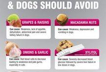 Food Pets Should Avoid / Food pets should avoid, things to not feed your dog, things to not feed your cat, bad food for pets, what is bad for pets