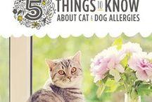 Allergies   Pets / Allergies in our pets, allergies your pets can get, what allergies your pets have, how to prevent allergies in pets, how to care for allergies in your dog, how to care for allergies in your cat