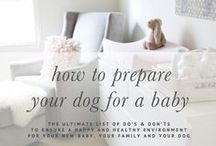 Pet Safety Tips / How to keep your pet safe, tips on pet safety, pet safety advice, taking care of a dog, taking care of a cat, pet safety issues