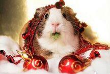 HO HO HO / Christmas: food, friends, decked halls... Should I say more?