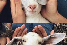 Cuteness Overload   Pet Memes + Pics / Pet memes, cat memes, dog memes, hilarious pet photos, cuteness overload with pets, hilarious animal pictures