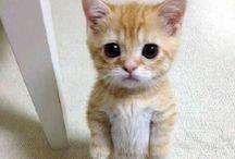 Cuteness / Baby animals, unusual pics, things I love.