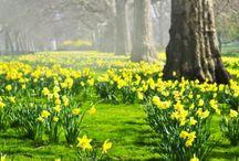 Spring / Spring decor seasonal updates