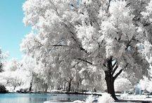 Winter / Winter decor seasonal update ideas