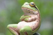 Froggies / by Terri Weddle Troyan