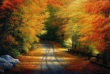 Season (Fall & Autumn)