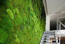 Vertical Garden & Living Wall