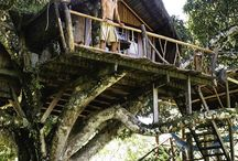 Architecture (Tree House)