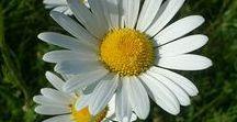 Blumen ✿ Blüten / Blumen tun der Seele gut, eine Sammlung reizvoller Fotos, einfach so zum Schwelgen :-)